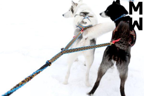 байкджоринг скиджоринг въжета