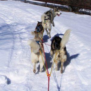 Аксесоари за кучешки впрягове – SLED DOGS